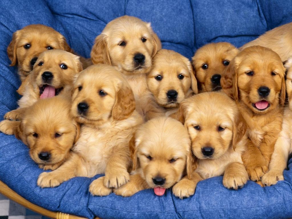 Vita A Sei Zampe Non Regalare Cuccioli Provenienti Dallest