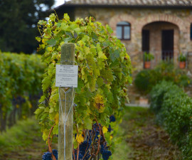 chianti-vino-economia-toscana