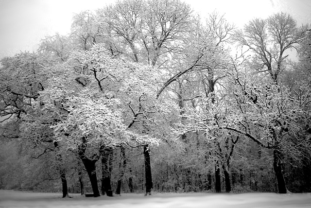 tree-503104_640
