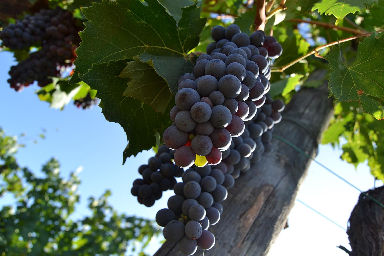 Wine siena news for Questura di brescia nuova lista 2017