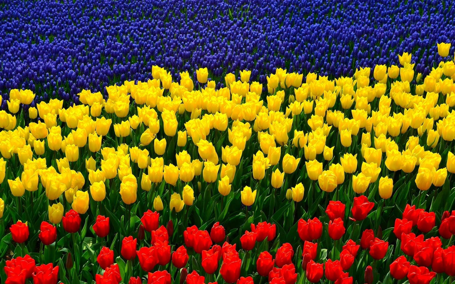 Dalla Toscana idee per non fare appassire i fiori