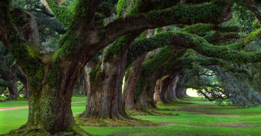 Giuseppe Semboloni, I miei amici alberi e la loro voce, Siena, nuova immagine 2018