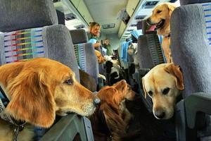 cane-in-treno
