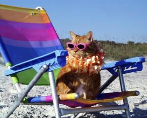 gatto_in_vacanza