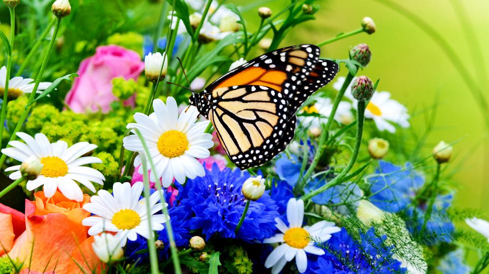 farfalle primavera