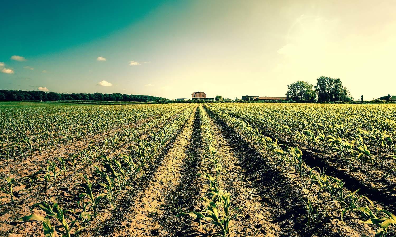 Produrre cibo inquina (e molto, molto più di quello che pensiamo)