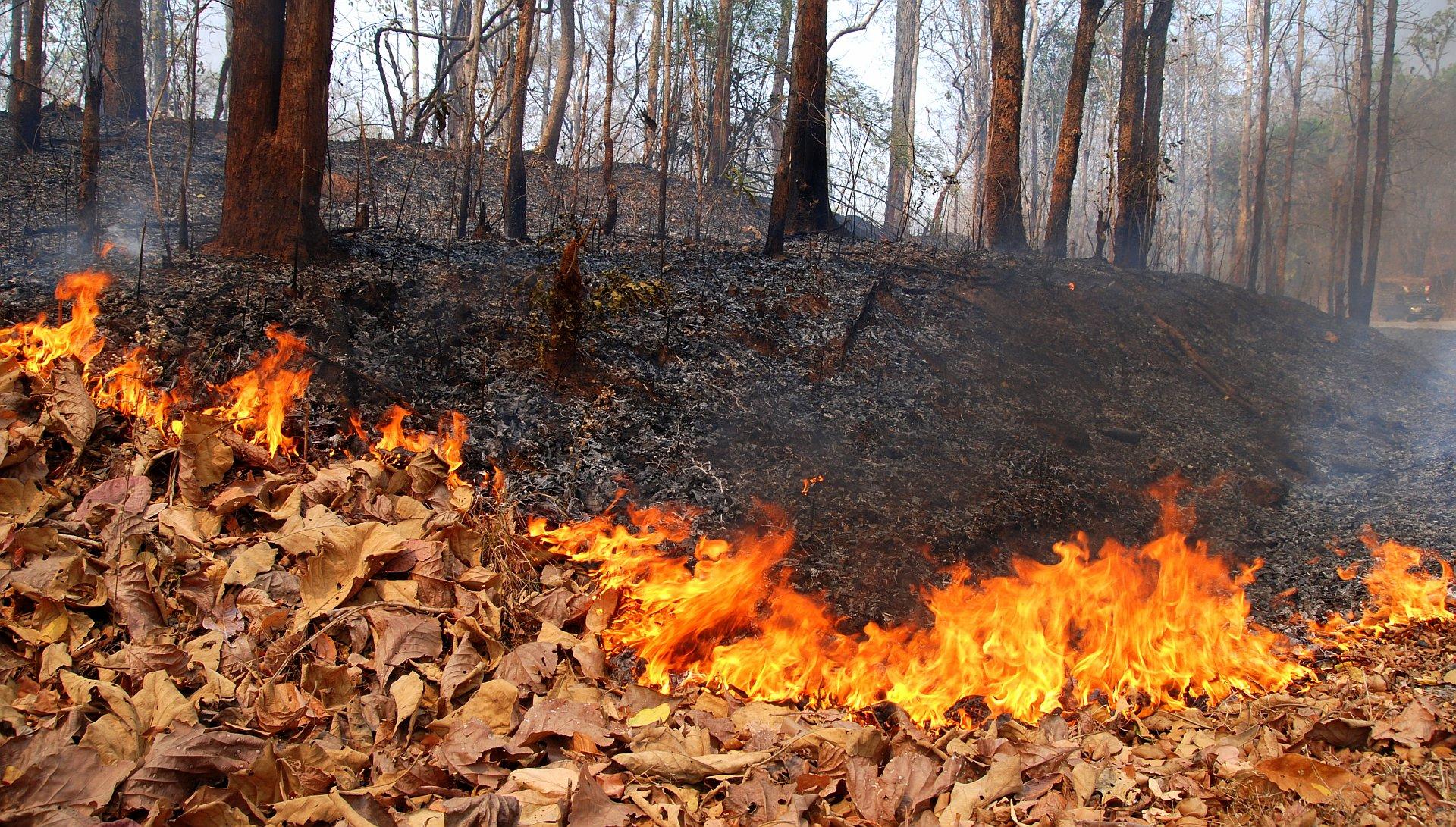 Incendi boschivi, massima allerta in Toscana