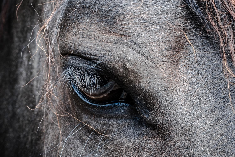 Puro Sangue: Delitti, cavalli e amori