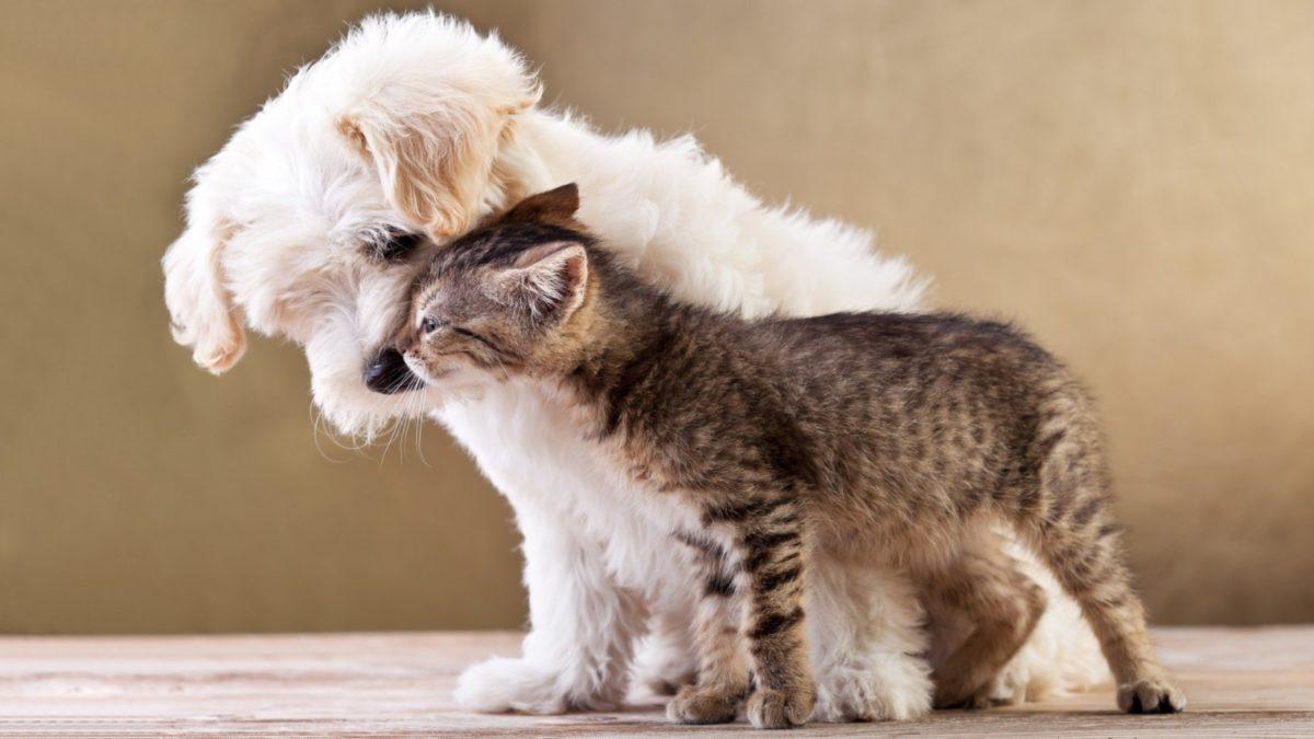 Come risparmiare sulle spese per i nostri amici animali