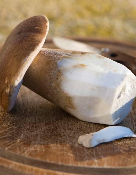 funghi porcini sapori di toscana